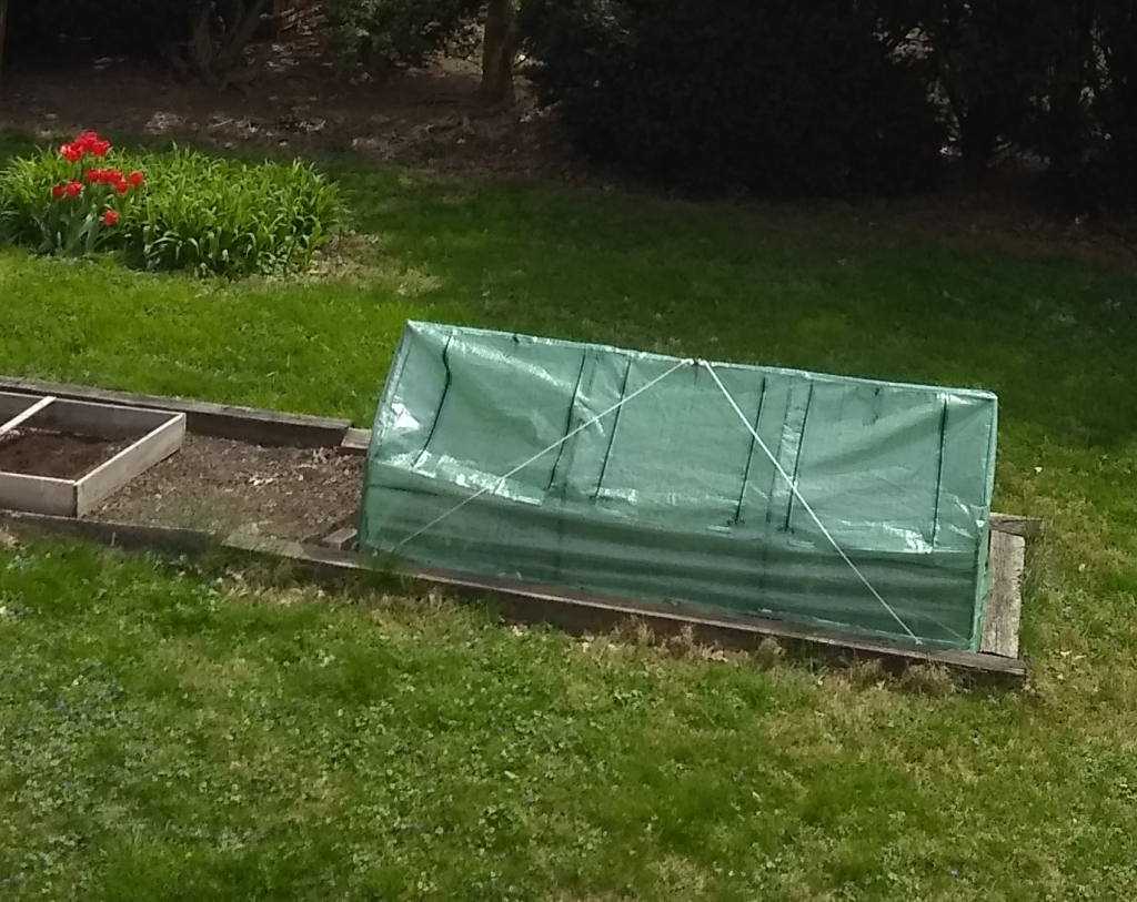 portable greenhouse staked like a tent